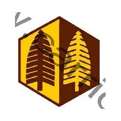 Badge éclaireur GSE - forêt