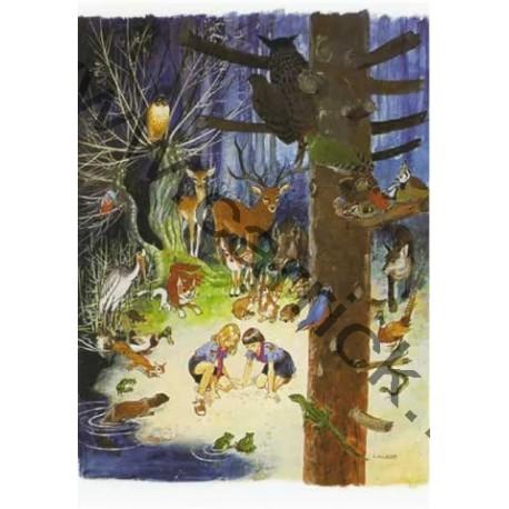 Poster Féerie des bois